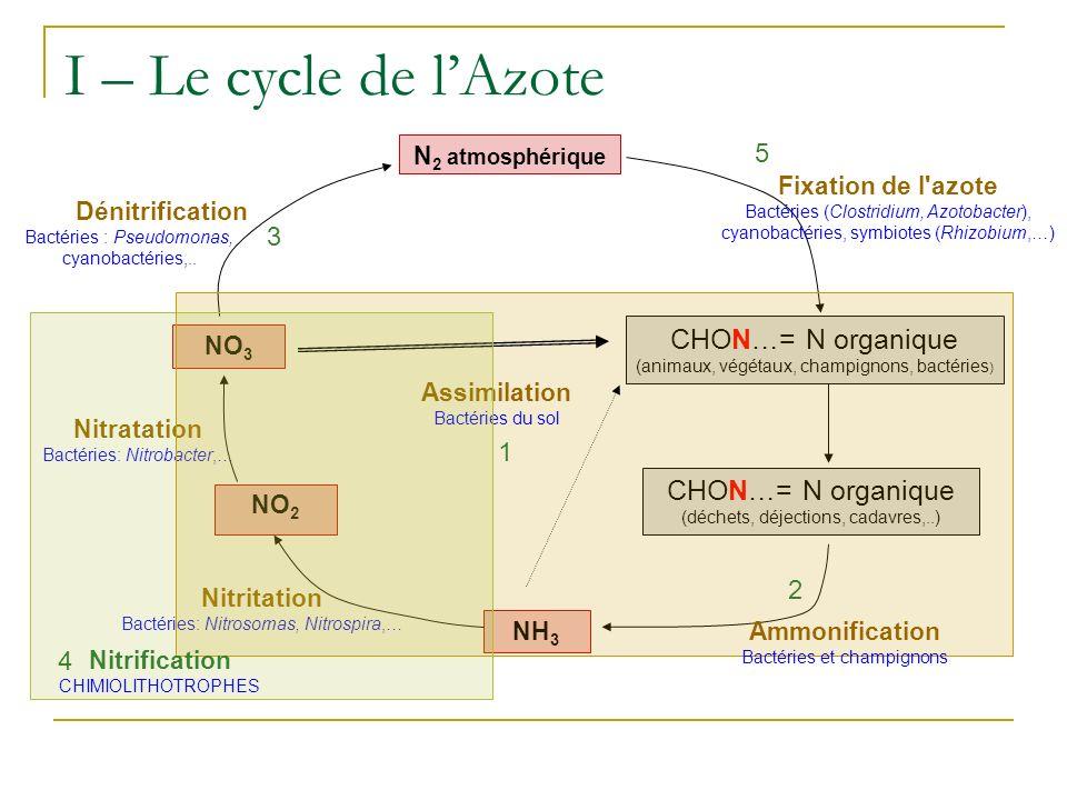 I – Le cycle de lAzote N 2 atmosphérique NO 2 NO 3 NH 3 CHON…= N organique (déchets, déjections, cadavres,..) CHON…= N organique (animaux, végétaux, champignons, bactéries ) Nitritation Bactéries: Nitrosomas, Nitrospira,… Nitratation Bactéries: Nitrobacter,… 1 Assimilation Bactéries du sol Ammonification Bactéries et champignons 2 4 Nitrification CHIMIOLITHOTROPHES Dénitrification Bactéries : Pseudomonas, cyanobactéries,..