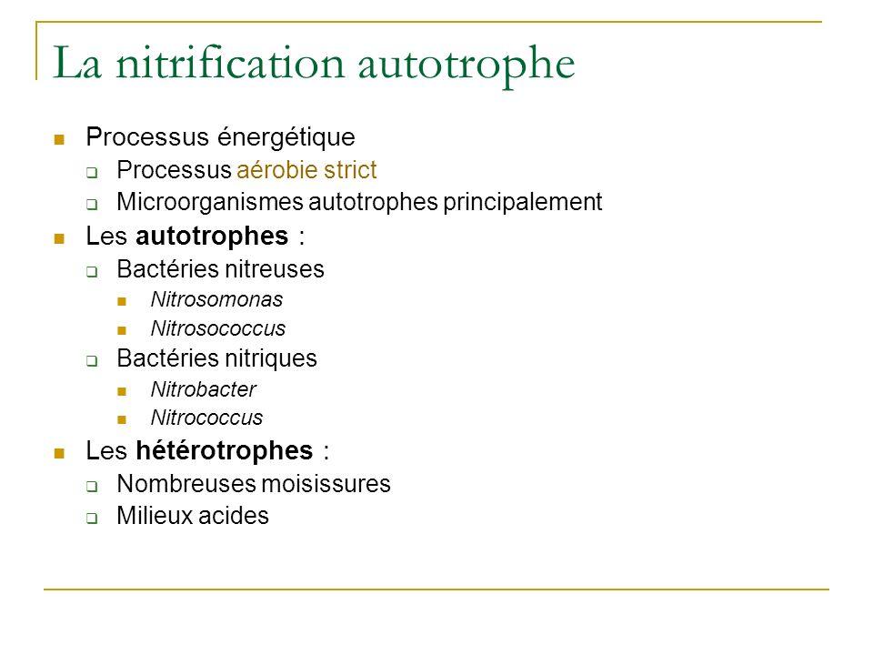 La nitrification autotrophe Processus énergétique Processus aérobie strict Microorganismes autotrophes principalement Les autotrophes : Bactéries nitreuses Nitrosomonas Nitrosococcus Bactéries nitriques Nitrobacter Nitrococcus Les hétérotrophes : Nombreuses moisissures Milieux acides
