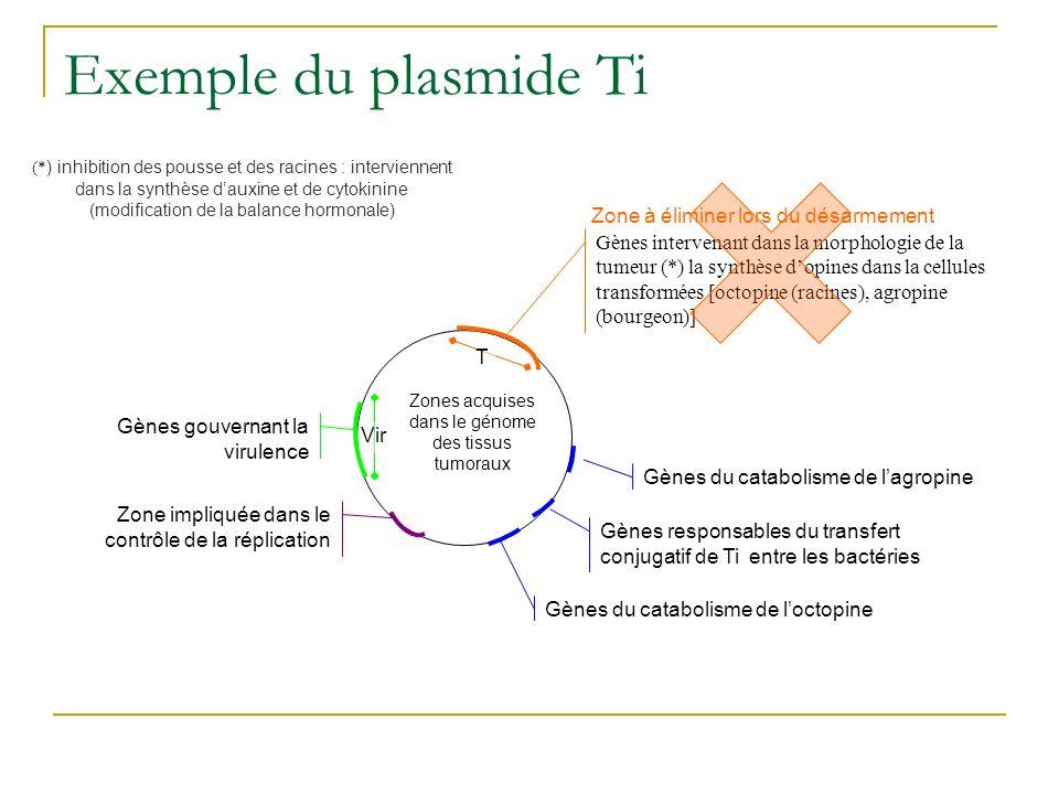 Exemple du plasmide Ti Gènes gouvernant la virulence Zone impliquée dans le contrôle de la réplication Gènes intervenant dans la morphologie de la tumeur (*) la synthèse dopines dans la cellules transformées [octopine (racines), agropine (bourgeon)] Gènes du catabolisme de lagropine Gènes du catabolisme de loctopine Gènes responsables du transfert conjugatif de Ti entre les bactéries Zones acquises dans le génome des tissus tumoraux Zone à éliminer lors du désarmement (* ) inhibition des pousse et des racines : interviennent dans la synthèse dauxine et de cytokinine (modification de la balance hormonale) T Vir
