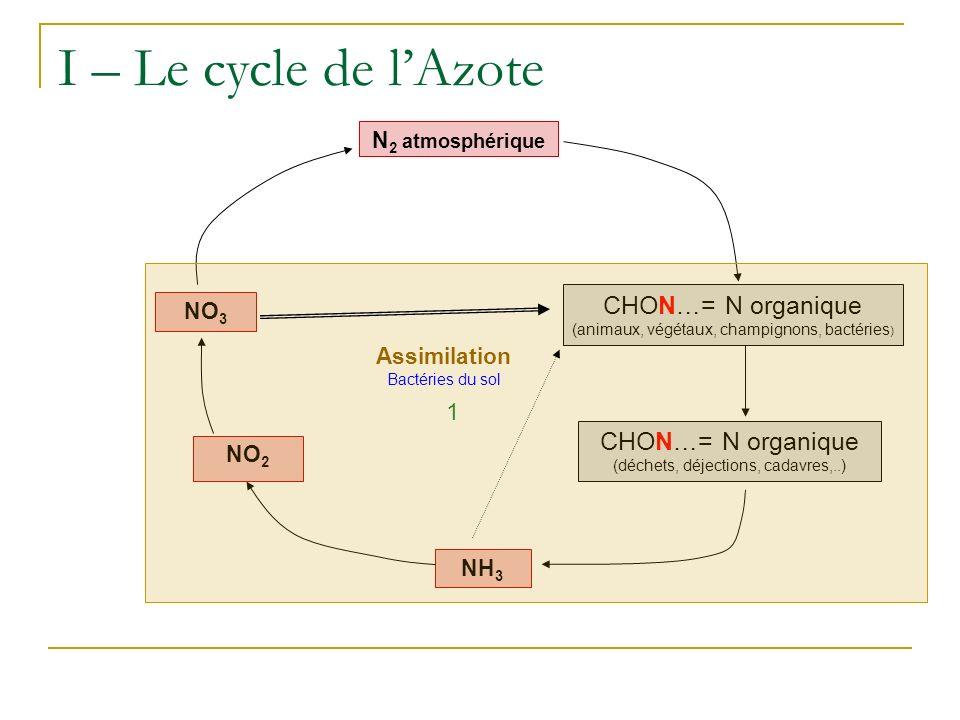 I – Le cycle de lAzote N 2 atmosphérique NO 2 NO 3 NH 3 CHON…= N organique (déchets, déjections, cadavres,..) CHON…= N organique (animaux, végétaux, c