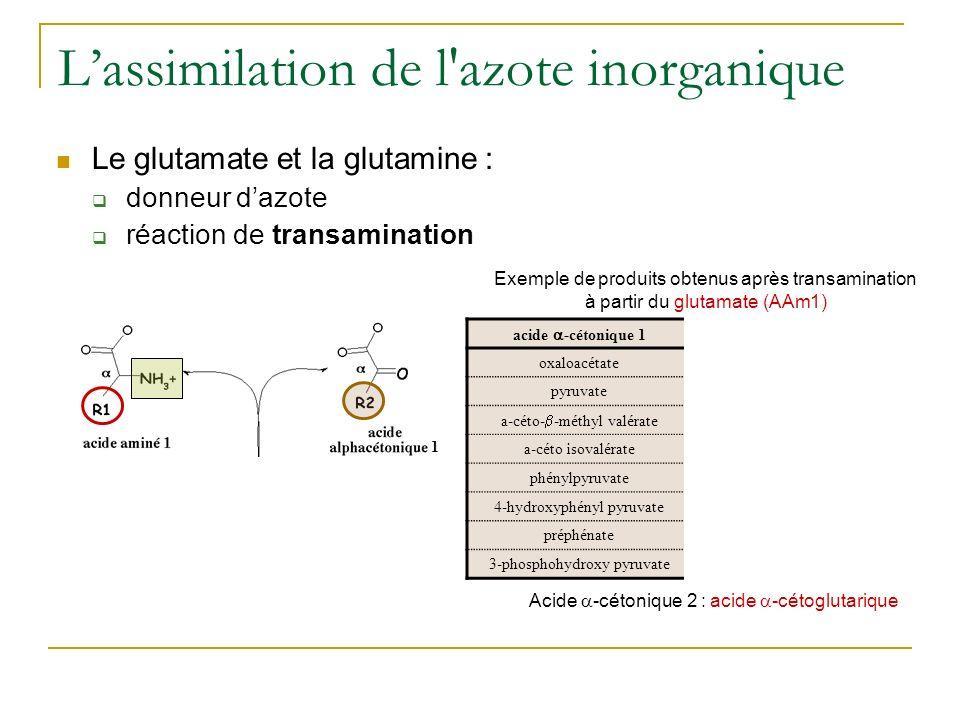 Lassimilation de l azote inorganique Le glutamate et la glutamine : donneur dazote réaction de transamination transaminases acide -cétonique 1 acide aminé 2 oxaloacétateAsp pyruvateAla a-céto- -méthyl valérate Ile a-céto isovalérateVal phénylpyruvatePhe 4-hydroxyphényl pyruvateTyr préphénatearogénate (précurseur de Phe et Tyr) 3-phosphohydroxy pyruvate3-phosphosérine Exemple de produits obtenus après transamination à partir du glutamate (AAm1) 1 2 Acide -cétonique 2 : acide -cétoglutarique