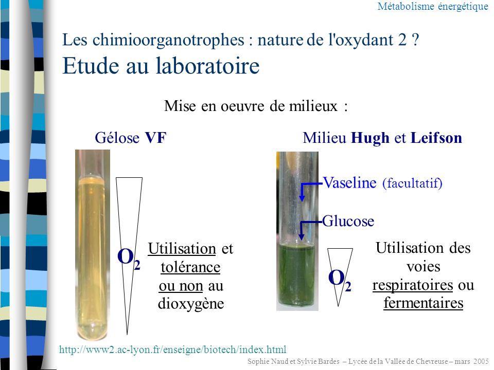Sophie Naud et Sylvie Bardes – Lycée de la Vallée de Chevreuse – mars 2005 Les chimioorganotrophes : nature de l oxydant 2 Métabolisme énergétique Oxydant 2 Y Réducteur 2 YH 2 2H + + 2e - minéral extracellulaire (O 2, NO 3 -,...) RESPIRATION FERMENTATION organique intracellulaire = =