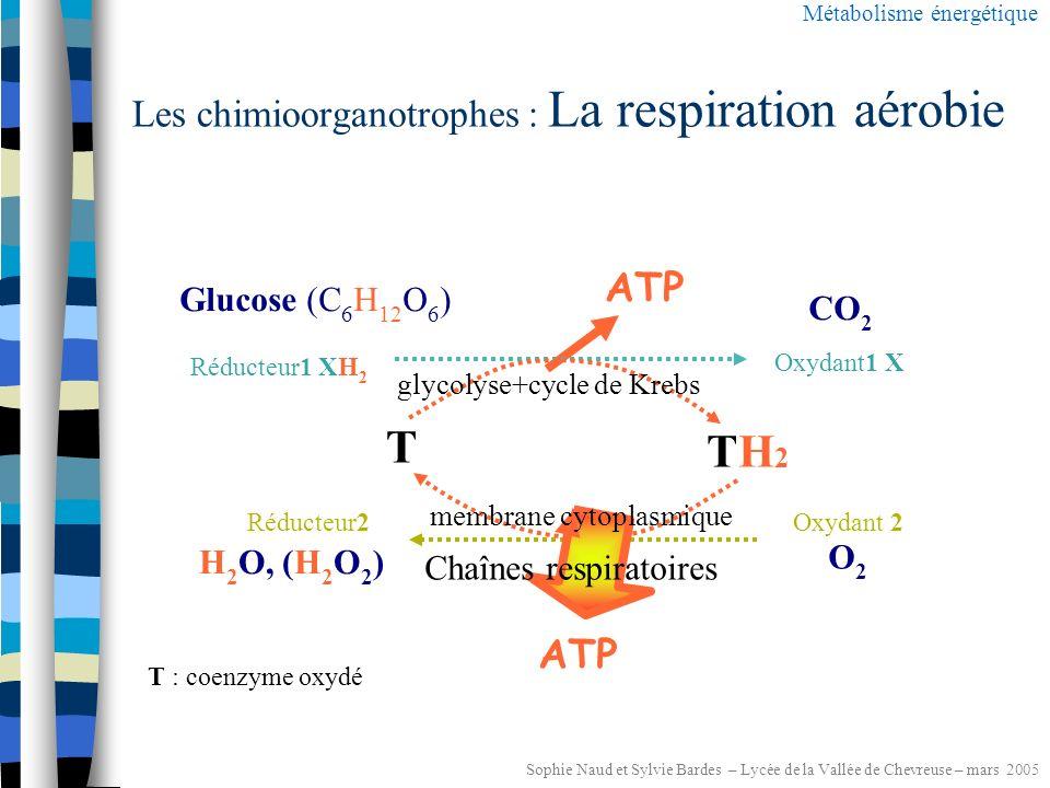 Sophie Naud et Sylvie Bardes – Lycée de la Vallée de Chevreuse – mars 2005 Les chimioorganotrophes : Les respirations Métabolisme énergétique Oxydant 2 Y Réducteur 2 YH 2 2H + + 2e - O2O2 NO 3 - SO 4 2- H2OH2ON 2, NH 4 H2SH2S Chaînes de transporteurs d e - et d H + Chaîne respiratoire aérobienitrateRESPIRATIONSsulfate