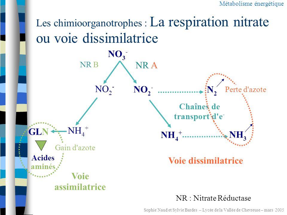 Sophie Naud et Sylvie Bardes – Lycée de la Vallée de Chevreuse – mars 2005 Les chimioorganotrophes : Les rapports au dioxygène au laboratoire Métabolisme énergétique Etude des constituants de la chaîne respiratoire Etude de la réduction complète de l O 2 Recherche de l oxydase Recherche de la catalase H2O2H2O2 N diméthyl paraphénylène diamine = étude de la toxicité de l O 2 http://www2.ac-lyon.fr/enseigne/biotech/index.html http://www.ac-grenoble.fr/sti-biotechnologies/