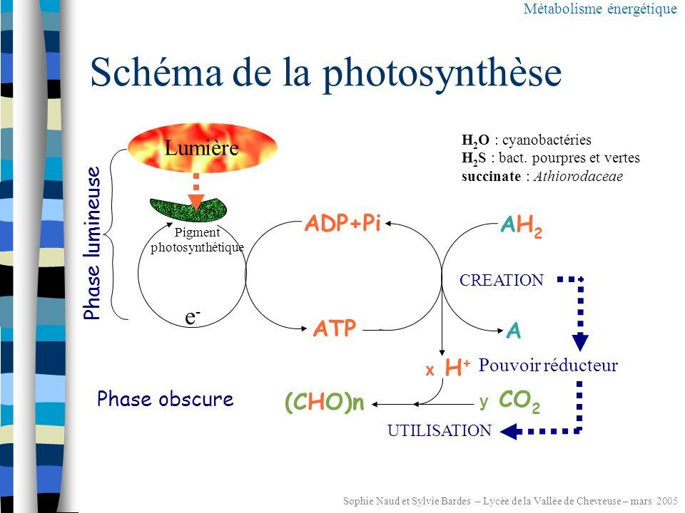 Sophie Naud et Sylvie Bardes – Lycée de la Vallée de Chevreuse – mars 2005 Le cycle de Calvin Métabolisme énergétique et interconversion et hexoses APG : phosphoglycérate RUBP : ribulose bis-phosphate