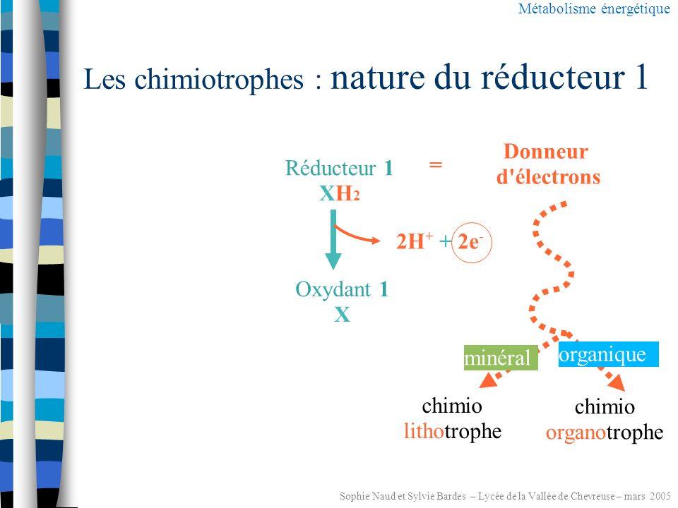 Sophie Naud et Sylvie Bardes – Lycée de la Vallée de Chevreuse – mars 2005 Les chimiotrophes Energie libérée lors de réactions chimiques d oxydo-réduction Métabolisme énergétique NUTRIMENTS : ce sont des réducteurs Réducteur 2 YH 2 Oxydant 2 Y T (ATP) ATP Réducteur 1 XH 2 Oxydant 1 X TH2TH2 T : coenzyme oxydé