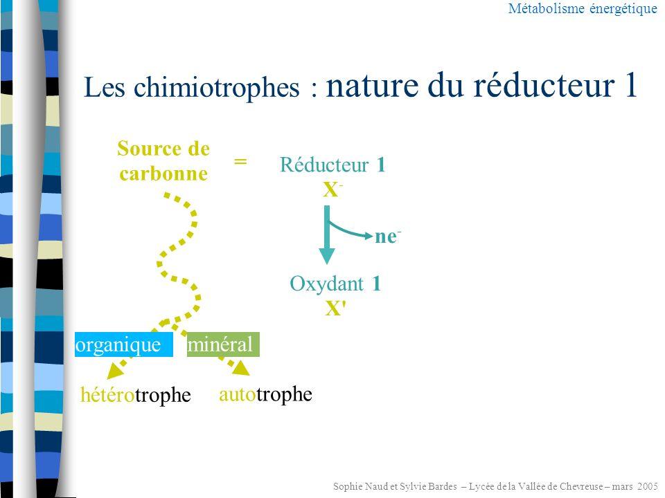 Sophie Naud et Sylvie Bardes – Lycée de la Vallée de Chevreuse – mars 2005 Les chimiotrophes : nature du réducteur 1 Métabolisme énergétique Réducteur 1 XH 2 Oxydant 1 X 2H + + 2e - minéral organique chimio lithotrophe chimio organotrophe Donneur d électrons =