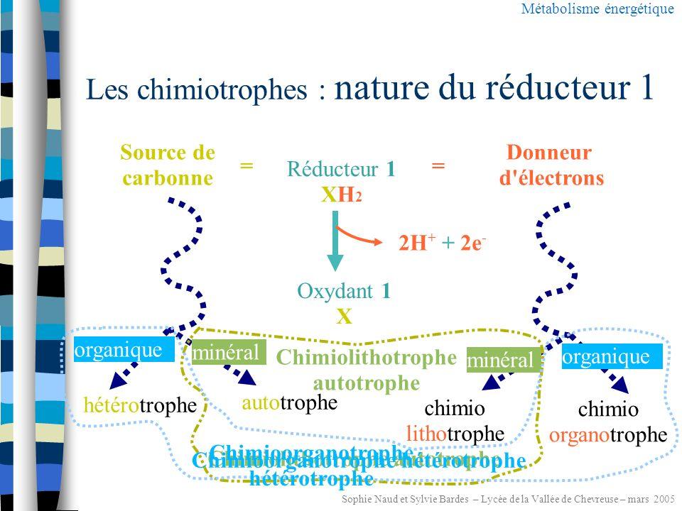 Sophie Naud et Sylvie Bardes – Lycée de la Vallée de Chevreuse – mars 2005 Les chimio-litotrophes Métabolisme énergétique