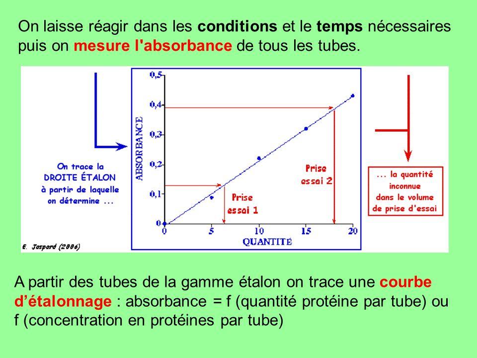 On laisse réagir dans les conditions et le temps nécessaires puis on mesure l'absorbance de tous les tubes. A partir des tubes de la gamme étalon on t