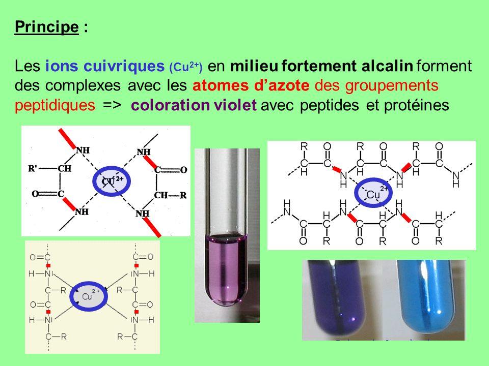 Principe : Les ions cuivriques (Cu 2+ ) en milieu fortement alcalin forment des complexes avec les atomes dazote des groupements peptidiques => colora