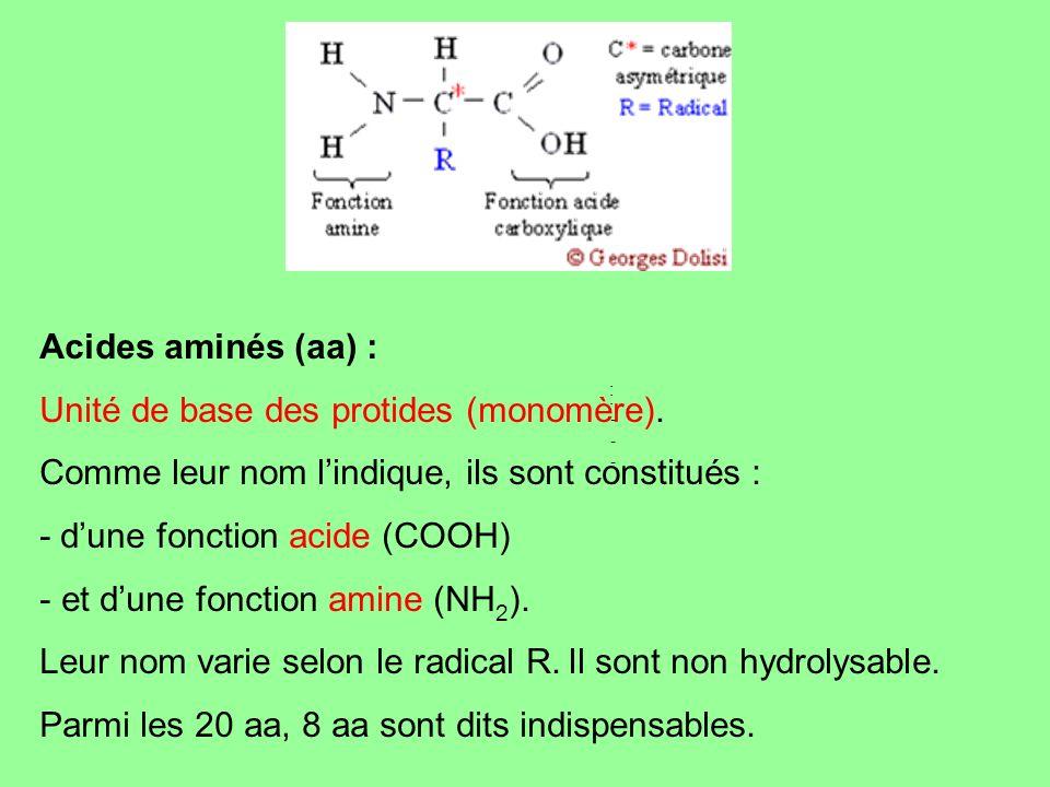 Acides aminés (aa) : Unité de base des protides (monomère). Comme leur nom lindique, ils sont constitués : - dune fonction acide (COOH) - et dune fonc