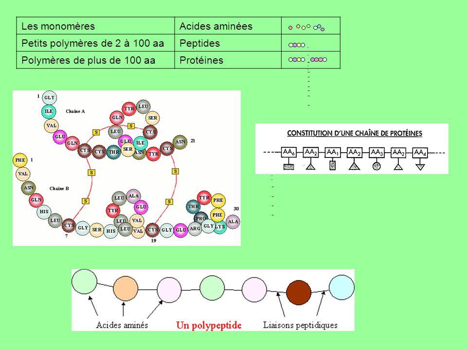 -------------- -------------- Les monomèresAcides aminées Petits polymères de 2 à 100 aaPeptides Polymères de plus de 100 aaProtéines --------------