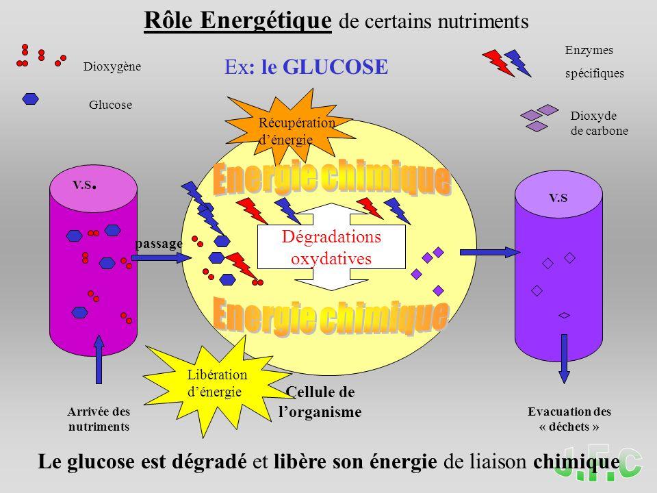 Dégradations oxydatives V.S. V.S Glucose Dioxygène Arrivée des nutriments Evacuation des « déchets » Cellule de lorganisme Dioxyde de carbone Rôle Ene