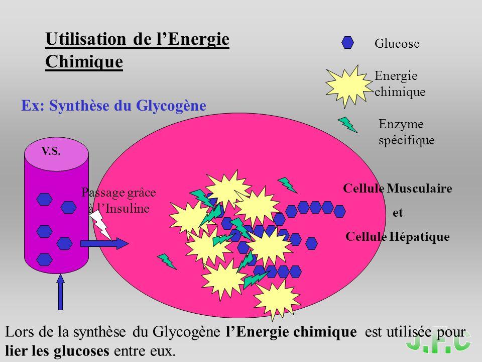 Glucose Energie chimique Enzyme spécifique Utilisation de lEnergie Chimique Ex: Synthèse du Glycogène V.S.
