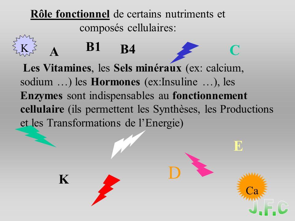 Les Vitamines, les Sels minéraux (ex: calcium, sodium …) les Hormones (ex:Insuline …), les Enzymes sont indispensables au fonctionnement cellulaire (ils permettent les Synthèses, les Productions et les Transformations de lEnergie) A B1 B4 C D K E Ca K Rôle fonctionnel de certains nutriments et composés cellulaires: