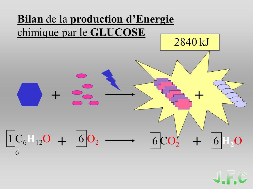 Transformations de lEnergie Chimique Energie chimique Energie mécanique Energie thermique Permet la Contraction musculaire La Dégradation du glucose Avec libération de chaleur V.S.
