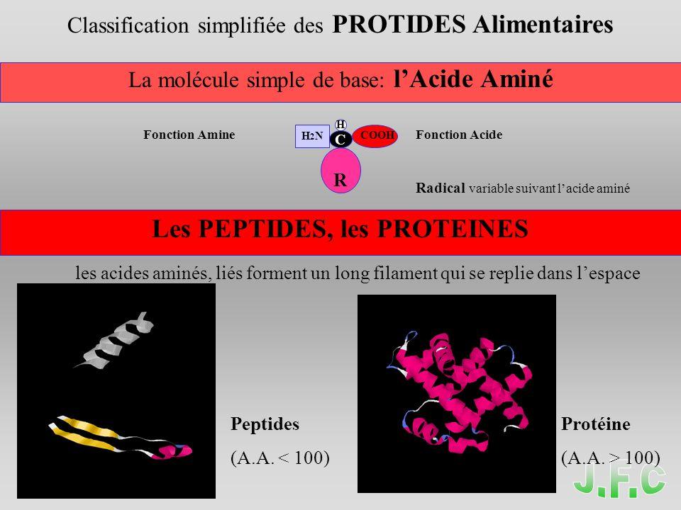 Classification simplifiée des PROTIDES Alimentaires La molécule simple de base: lAcide Aminé Fonction AmineFonction Acide Radical variable suivant lacide aminé Les PEPTIDES, les PROTEINES les acides aminés, liés forment un long filament qui se replie dans lespace Peptides Protéine (A.A.