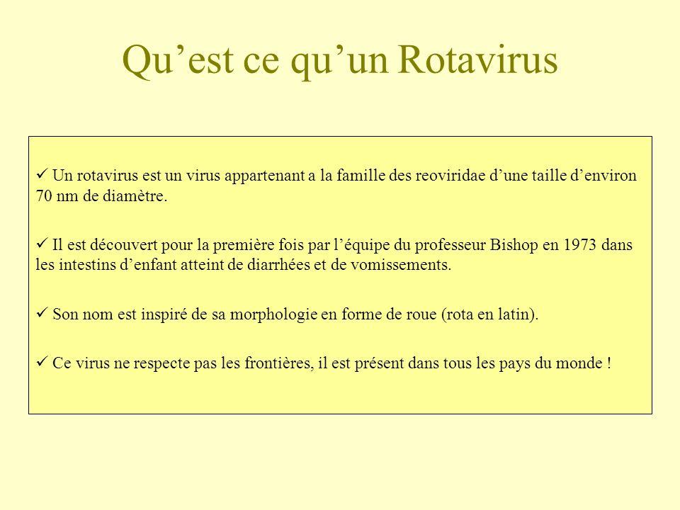 Quest ce quun Rotavirus Un rotavirus est un virus appartenant a la famille des reoviridae dune taille denviron 70 nm de diamètre. Il est découvert pou