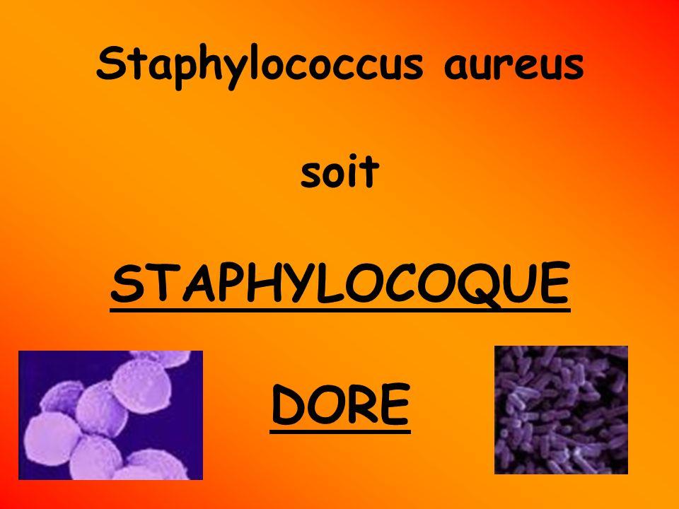 Généralité Le staphylocoque doré (Staphylococcus aureus) est l espèce la plus pathogène du genre Staphylococcus.
