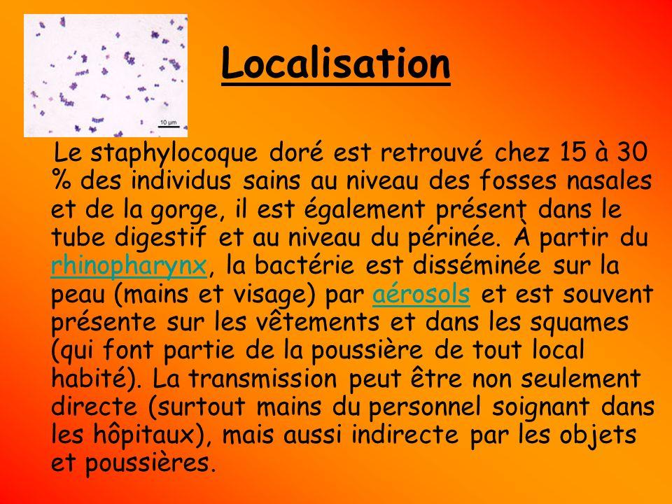 Localisation Le staphylocoque doré est retrouvé chez 15 à 30 % des individus sains au niveau des fosses nasales et de la gorge, il est également prése