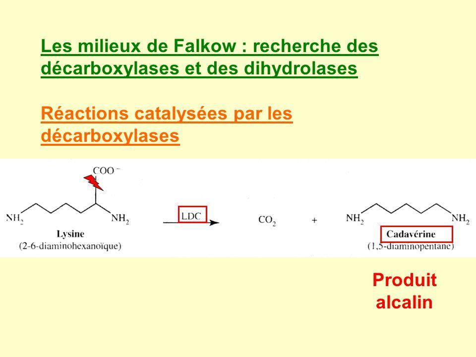 Les milieux de Falkow : recherche des décarboxylases et des dihydrolases Réactions catalysées par les décarboxylases Produit alcalin