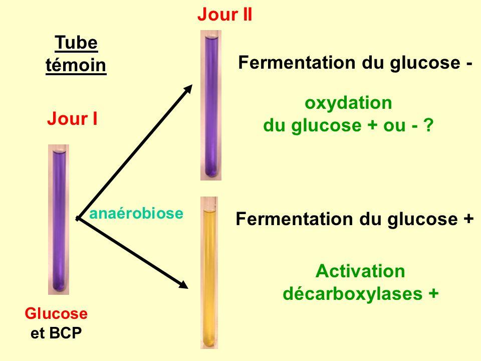 Tube témoin Jour I Jour II Fermentation du glucose - oxydation du glucose + ou - .