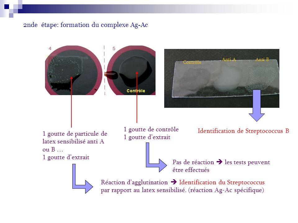 2nde étape: formation du complexe Ag-Ac 1 goutte de contrôle 1 goutte dextrait 1 goutte de particule de latex sensibilisé anti A ou B … 1 goutte dextrait Réaction dagglutination Identification du Streptococcus par rapport au latex sensibilisé.