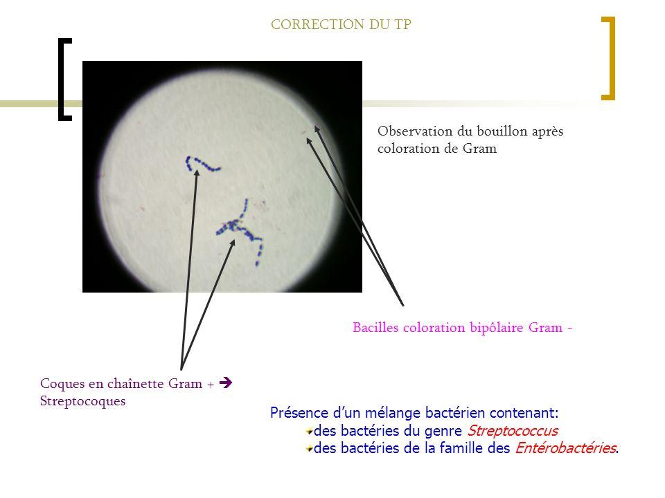 Coques en chaînette Gram + Streptocoques Bacilles coloration bipôlaire Gram - Présence d un mélange bactérien contenant: des bactéries du genre Streptococcus des bactéries de la famille des Entérobactéries.