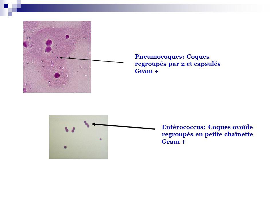 Pneumocoques: Coques regroupés par 2 et capsulés Gram + Entérococcus: Coques ovoïde regroupés en petite chaînette Gram +