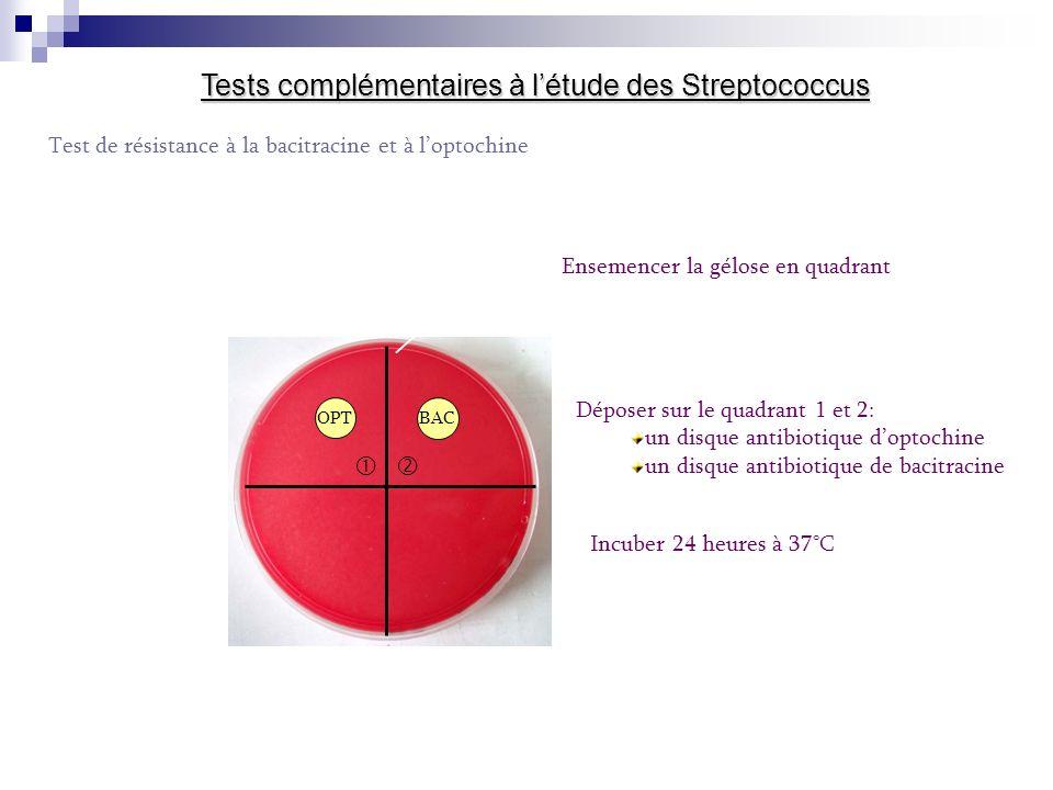 Tests complémentaires à létude des Streptococcus Test de résistance à la bacitracine et à loptochine Ensemencer la gélose en quadrant OPTBAC Déposer sur le quadrant 1 et 2: un disque antibiotique doptochine un disque antibiotique de bacitracine Incuber 24 heures à 37°C