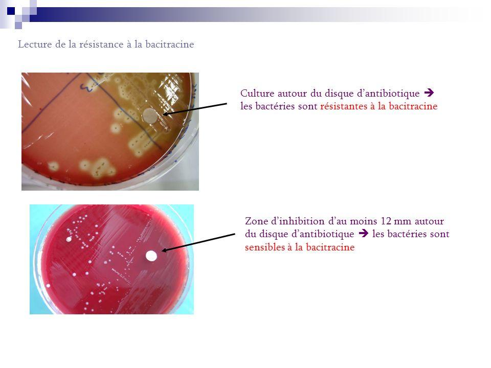 Lecture de la résistance à la bacitracine Culture autour du disque dantibiotique les bactéries sont résistantes à la bacitracine Zone d inhibition d au moins 12 mm autour du disque d antibiotique les bactéries sont sensibles à la bacitracine