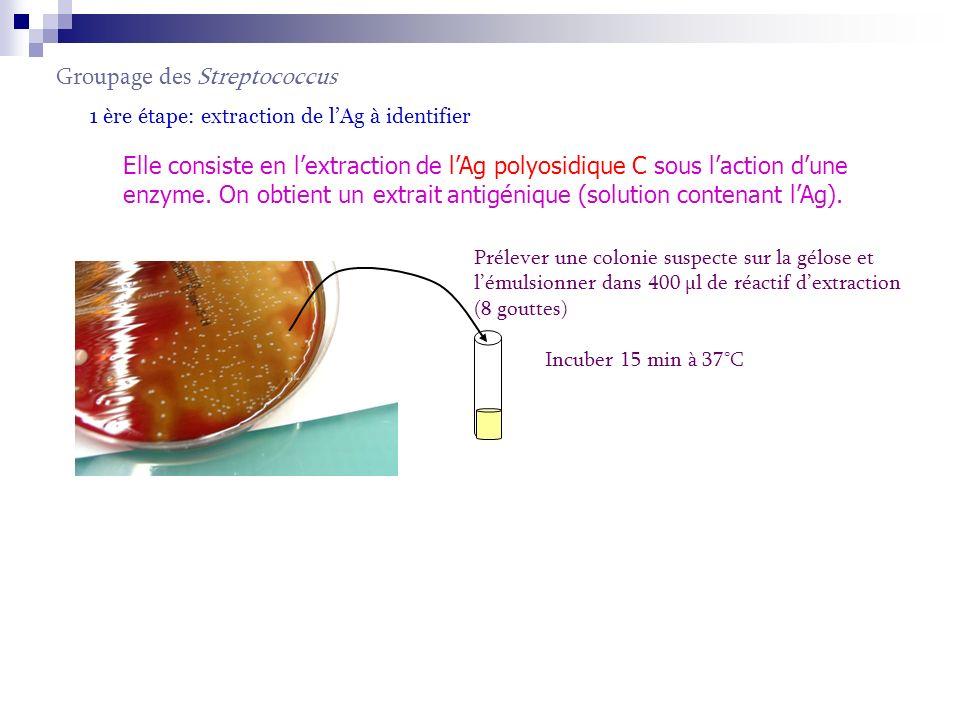 Groupage des Streptococcus 1 ère étape: extraction de lAg à identifier Elle consiste en lextraction de lAg polyosidique C sous laction dune enzyme. On