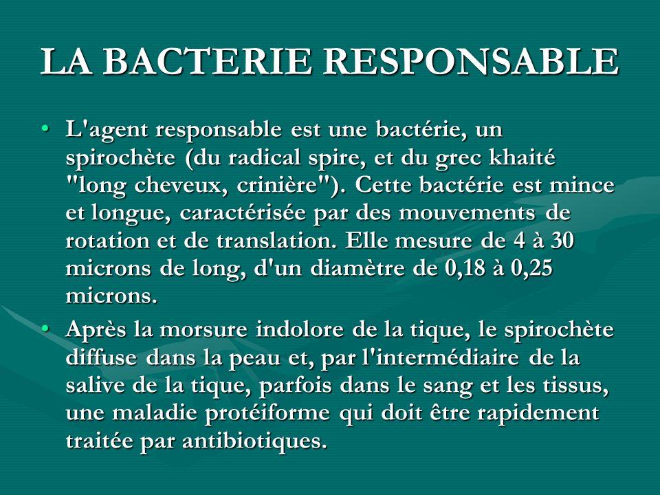 LA BACTERIE RESPONSABLE L'agent responsable est une bactérie, un spirochète (du radical spire, et du grec khaité
