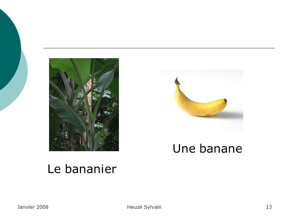 Janvier 2008Heuzé Sylvain13 Le bananier Une banane