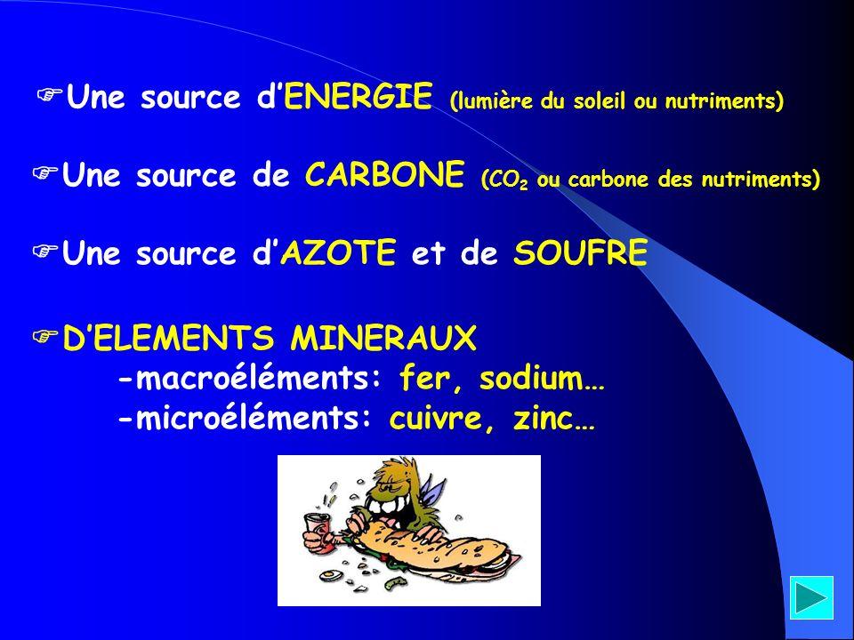 Une source dENERGIE (lumière du soleil ou nutriments) Une source de CARBONE (CO 2 ou carbone des nutriments) Une source dAZOTE et de SOUFRE DELEMENTS
