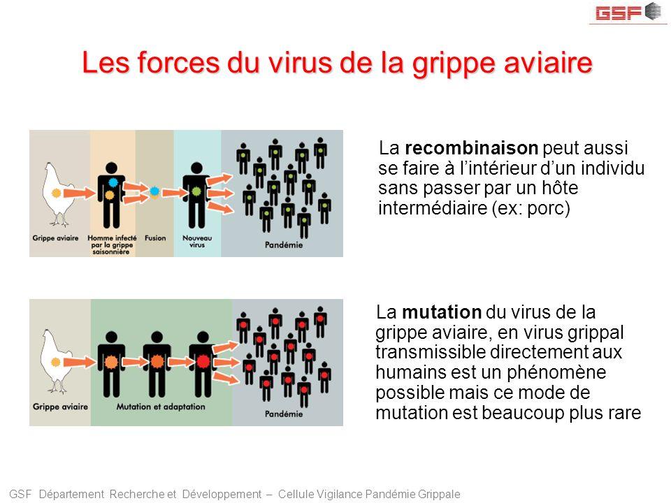 GSF Département Recherche et Développement – Cellule Vigilance Pandémie Grippale Les forces du virus de la grippe aviaire La recombinaison peut aussi