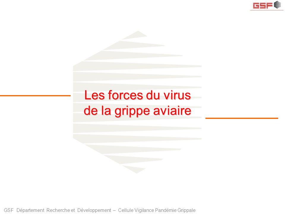 GSF Département Recherche et Développement – Cellule Vigilance Pandémie Grippale Les forces du virus de la grippe aviaire