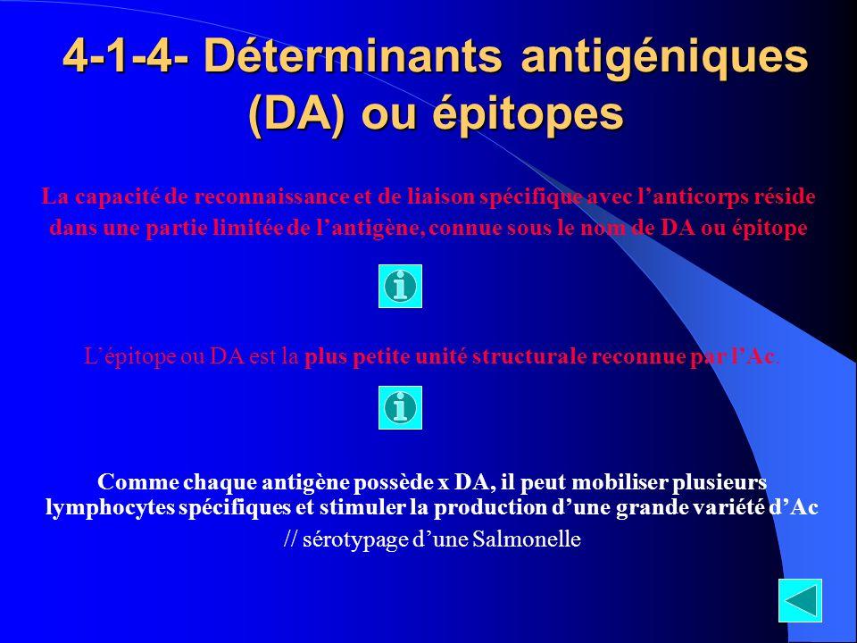 4-1-4- Déterminants antigéniques (DA) ou épitopes La capacité de reconnaissance et de liaison spécifique avec lanticorps réside dans une partie limité