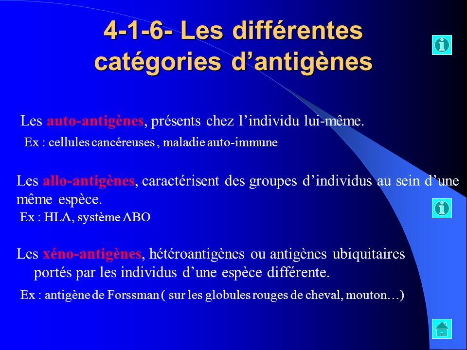4-1-6- Les différentes catégories dantigènes Les xéno-antigènes, hétéroantigènes ou antigènes ubiquitaires portés par les individus dune espèce différ