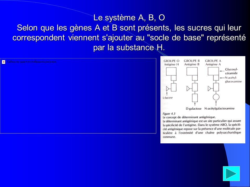 Le système A, B, O Selon que les gènes A et B sont présents, les sucres qui leur correspondent viennent s'ajouter au