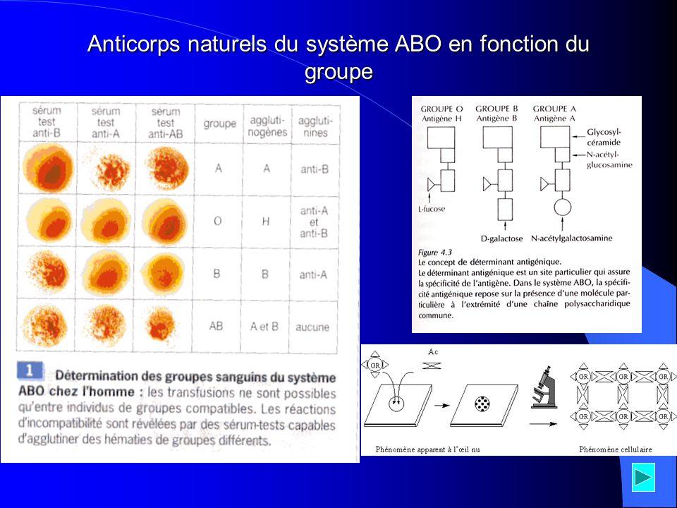 Anticorps naturels du système ABO en fonction du groupe