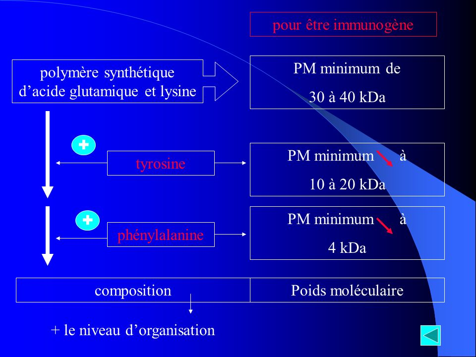 polymère synthétique dacide glutamique et lysine PM minimum de 30 à 40 kDa pour être immunogène + tyrosine PM minimum à 10 à 20 kDa + phénylalanine PM