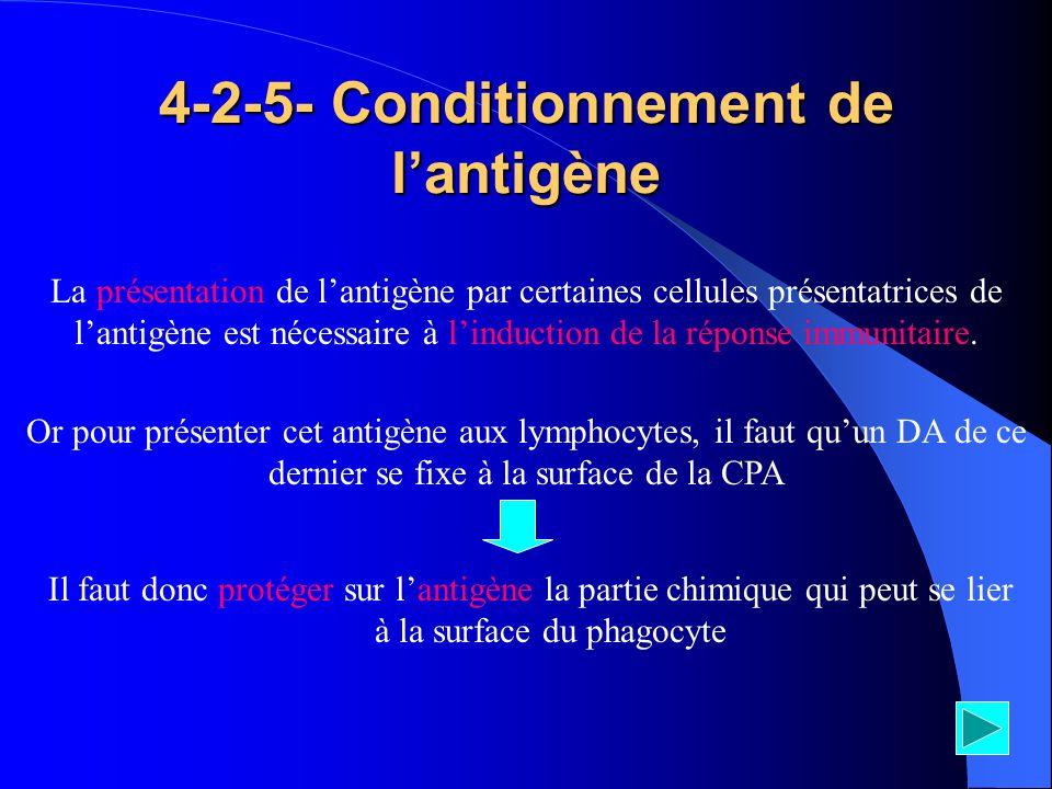 4-2-5- Conditionnement de lantigène Il faut donc protéger sur lantigène la partie chimique qui peut se lier à la surface du phagocyte La présentation