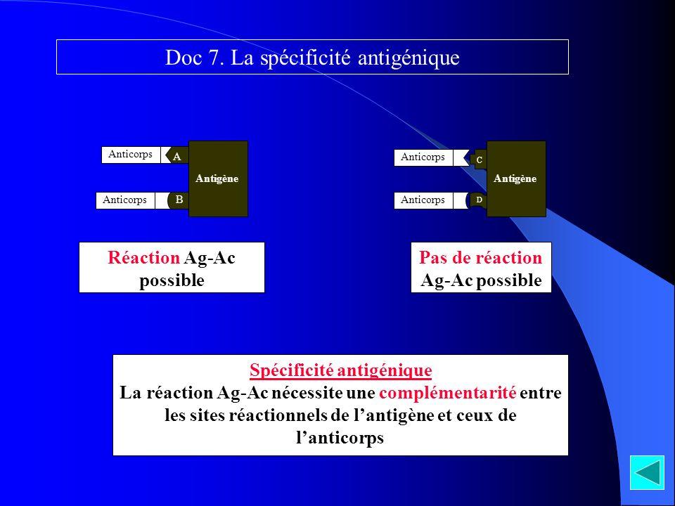 A B Antigène Réaction Ag-Ac possible Pas de réaction Ag-Ac possible C D Antigène Anticorps Spécificité antigénique La réaction Ag-Ac nécessite une com