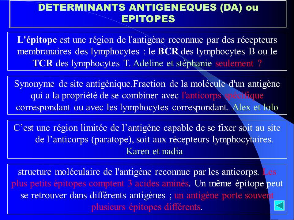 DETERMINANTS ANTIGENEQUES (DA) ou EPITOPES L'épitope est une région de l'antigène reconnue par des récepteurs membranaires des lymphocytes : le BCR de