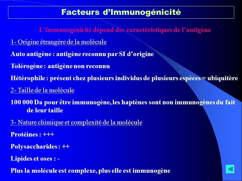 Limmunogénicité dépend des caractéristiques de lantigène 1- Origine étrangère de la molécule Auto antigène : antigène reconnu par SI dorigine Tolérogè