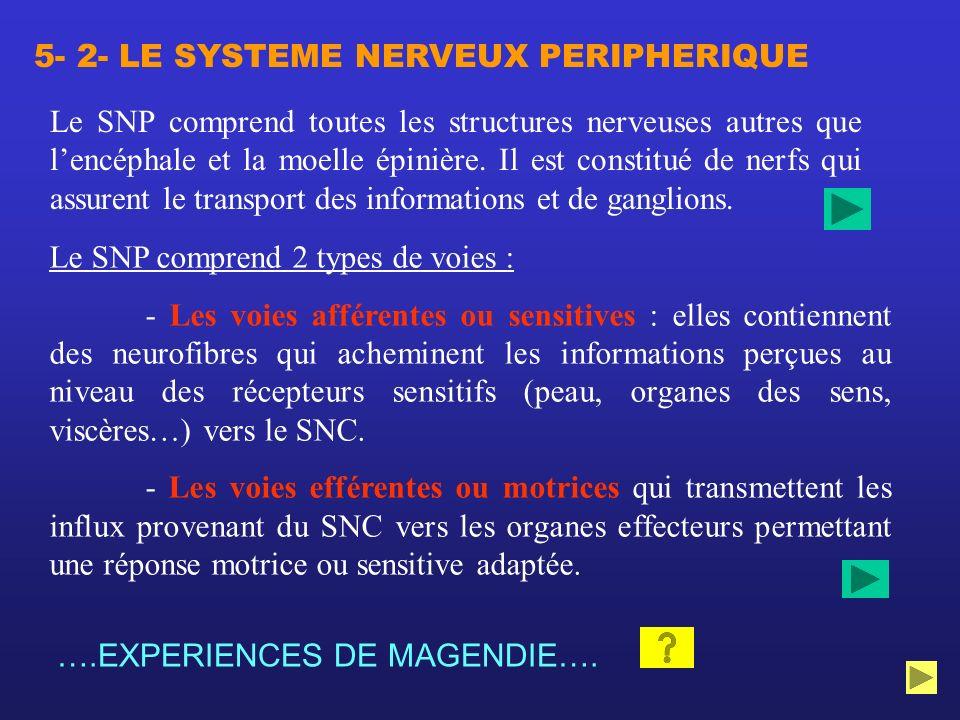 Le SNP comprend toutes les structures nerveuses autres que lencéphale et la moelle épinière. Il est constitué de nerfs qui assurent le transport des i
