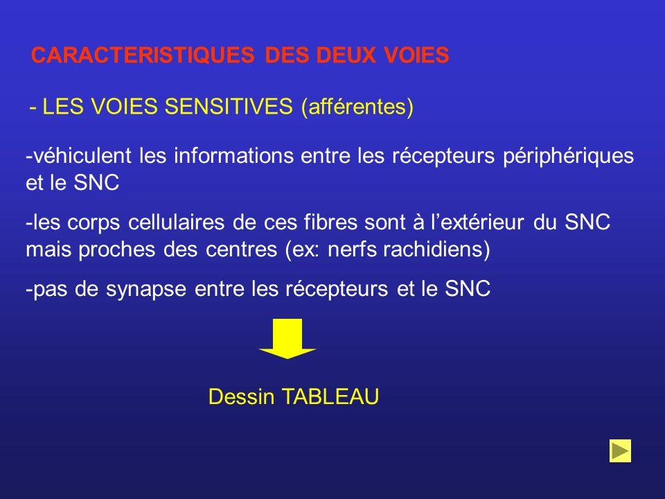 - LES VOIES SENSITIVES (afférentes) -véhiculent les informations entre les récepteurs périphériques et le SNC -les corps cellulaires de ces fibres son