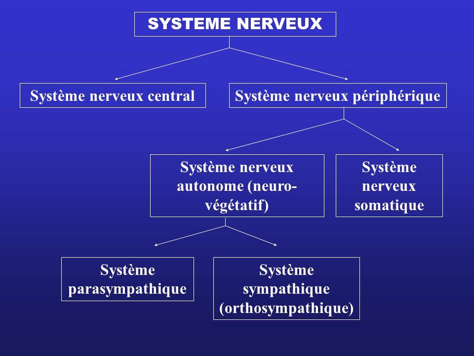 SYSTEME NERVEUX Système nerveux central Système nerveux autonome (neuro- végétatif) Système sympathique (orthosympathique) Système parasympathique Sys