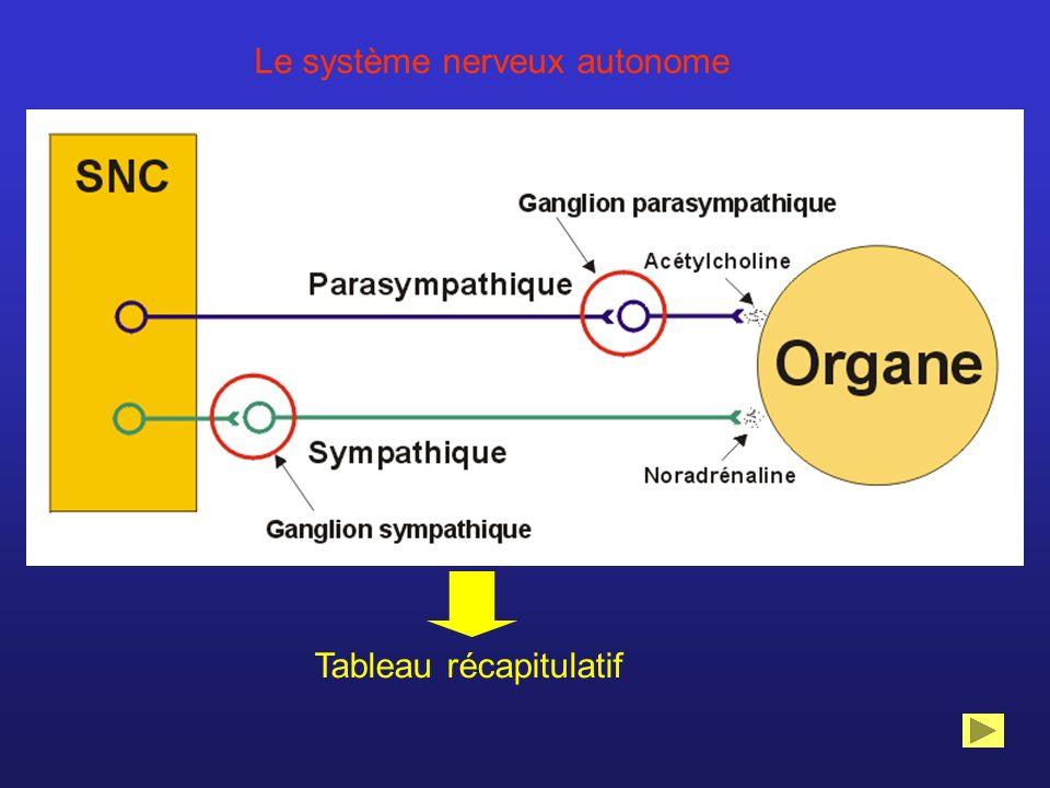 Tableau récapitulatif Le système nerveux autonome